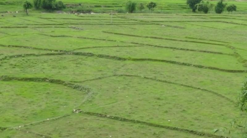 मुक्त हलियालाई आवास बनाउन जग्गा खोजी