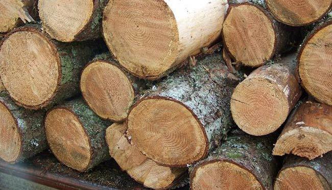 बन्दाबन्दीको मौका छोपी वन कटानी र काठ चोरी तीव्र