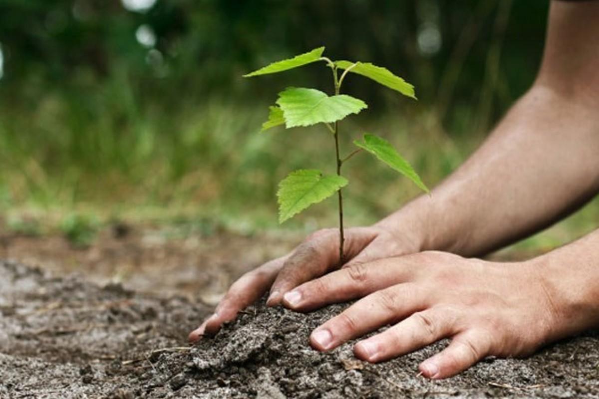 विश्व वातावरण दिवस : महोत्तरीमा नौ लाख वृक्षरोपण गरिँदै