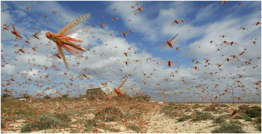 सलहबाट मकै बालीमा रु पाँच करोड क्षति